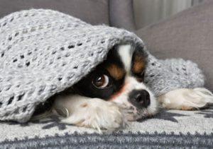 Keeping Pets Safe At Home